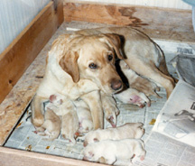 dog mother is taking care of her puppies