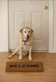 dog next to welcome mat