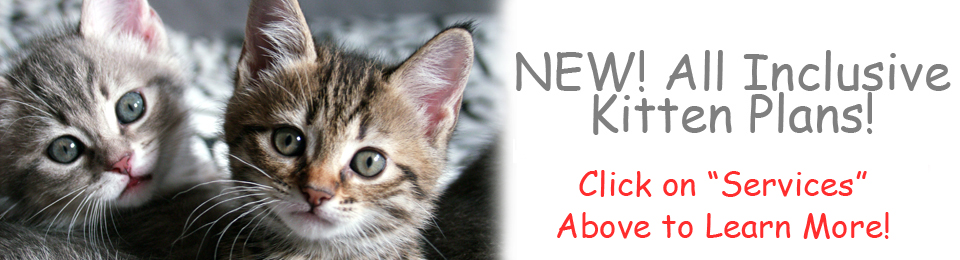 grey cat (s) with green eyes with message All inclusive kitten plan from Lennox animal hospital
