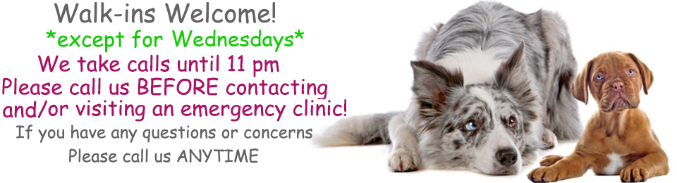 two dogs hovering with text walk in welcome except for Wednesdays at Lennox Animal Hospital