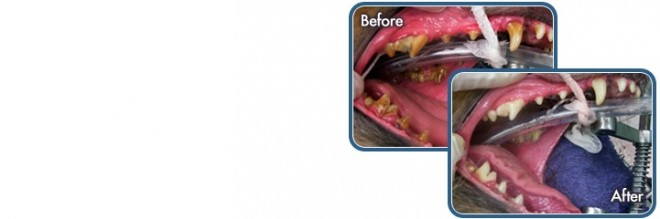 image of dental work before and after